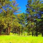 Продам земельный участок13 соток в живописном месте