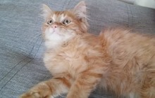 Подарю котенка