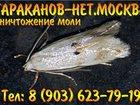 Смотреть фотографию  Уничтожение мукоедов, блох, постельных клопов за один раз, 32573530 в Москве
