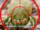 Фотография в   Дезинфекция квартиры, дома (коттеджа). Уничтожение в Москве 2500