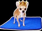 Увидеть изображение  Многоразовые пеленки для собак и других животных 33137493 в Твери