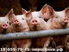 Смотреть foto  Поросята отъемыши 34017682 в Алатыри