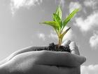 Фотография в   Предлогаем СЗР и семена от производителя. в Краснодаре 1