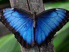 Свежее фото  Продажа живых тропических бабочек, Подари частицу Лета! Удиви близких! 37504154 в Краснодаре