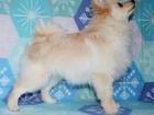 Изображение в Собаки и щенки Продажа собак, щенков Предлагаем подрощенного мальчика породы немецкий в Кургане 18000