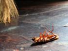 Уникальное foto  Как избавиться от запаха отравы в квартире, после уничтожения клопов, блох, тараканов? 38756178 в Москве