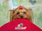 Уникальное изображение  Многоразовые пеленки для собак 38965451 в Москве