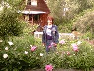 Продаю сад-дачу 10 соток Продается садовый участок в СТ «Сельхозтехника», 10 сот