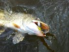 Фотография в Хобби и увлечения Рыбалка Платная рыбалка в Курске  Карп, карась, белый в Курске 500