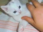 Просмотреть foto Отдам даром Гномик ищет семью 37839100 в Курске