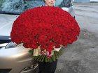 Скачать бесплатно foto Растения Куплю розы в Липецке 33856956 в Липецке