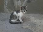Изображение в Кошки и котята Продажа кошек и котят Девочка, беспородистая, 1. 5 мес. , умная, в Липецке 0