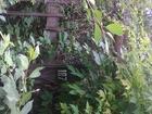 Свежее фотографию  Продам садовый участок 4,0 сотки 37867689 в Липецке