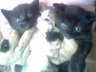 Чудо котятам ищут чудные руки