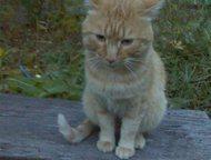 Найден кот Котик, умудрённый жизненным опытом, очень срочно нуждается в доме и д