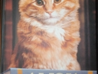 Новое изображение Разное Дьюи, Кот из библиотеки, который потряс весь мир 38779804 в Махачкале