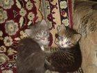 Фото в   Отдаем котят в добрые руки. Возраст 1, 5 в Миллерово 0