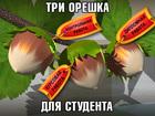 Просмотреть foto Курсовые, дипломные работы Отчеты, курсовые, контрольные, дипломы - все направления и предметы 33391584 в Минске