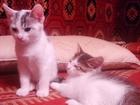 Новое изображение Приму в дар котята ищут дом 33518754 в Минске