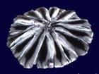 Уникальное фотографию Женская одежда Шкурки и изделия из шиншиллы европейского качества 34788372 в Москве