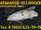 Смотреть изображение Разные услуги Уничтожить (вытравить) тараканов, мукоедов, блох, постельных клопов за один раз, 34840549 в Москве