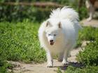 Изображение в Собаки и щенки Продажа собак, щенков К продаже подрощенный очень перспективный в Москве 20000