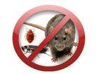 Изображение в Услуги компаний и частных лиц Разные услуги Уничтожение клопов тараканов всех насекомых в Москве 1500