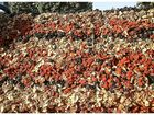 Фотография в Прочее,  разное Разное Предлагаем Вам отличные Сухофрукты из Киргизии, в Москве 125