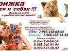 Увидеть фото Стрижка собак Стрижка кошек и собак, Выезд на дом,Стрижка животных выезд в любой район Москвы и Московская Область 38215832 в Москве