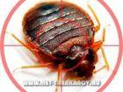 Просмотреть фотографию Разные услуги Тараканы, клопы, муравьи, блохи, мукоеды в жилых и нежилых помещениях, 39358678 в Москве