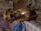Скачать фото Услуги для животных зооняня\ квартирная передержка собак 49732267 в Moscow