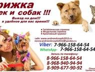 Стрижка кошек и собак, выезд на дом в любой район Москвы и Московская Область Пр