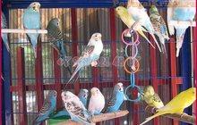 Сдам постоянно оптом экзотических птиц