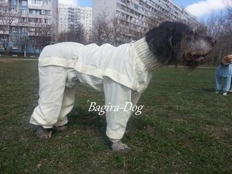 Скачать бесплатно foto Услуги для животных Комбинезоны от клещей 32717100 в Москве