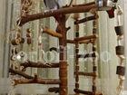 Фотография в Домашние животные Птички Продаются стенды-присады для попугаев. Мобильные, в Москве 13000