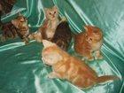 Фотография в Кошки и котята Продажа кошек и котят Питомник кошек Его Величество Мрамор 89096336572 в Москве 25000