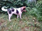 Фото в Собаки и щенки Продажа собак, щенков Отдам в добрые руки девочку 3 года. Зовут в Владимире 0