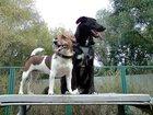 Фото в Домашние животные Услуги для животных Предлагается передержка для некрупной собаки в Москве 300