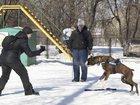 Фотография в   Дрессировка собак любых пород с 4 месяцев. в Москве 0