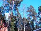 Изображение в   Удаление деревьев любой сложности с помощью в Москве 700