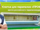 Новое изображение Зоомагазины Клетка для кур, бройлеров, перепелов, кроликов 34082590 в Москве