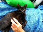 Фотография в Отдам даром - Приму в дар Отдам даром Шикарный черненький котенок ищет любящую в Москве 0