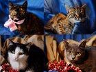 Фото в   Отдаются в дар великолепные котятки: полосатики, в Москве 100