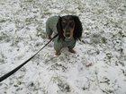 Просмотреть изображение Мужская одежда Передержка собак в Москве 34589048 в Москве