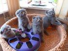 Изображение в Кошки и котята Продажа кошек и котят Очень красивые детки у нас получились. Хорошие в Москве 8000