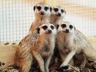 Фотография в   Трогательный зоопарк «Погладь Енота» — это в Москве 250