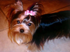 Фотография в   Стрижка собак и кошек всех видов пород. полный в Москве 0