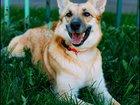 Фото в   Прекрасная собака Веста, спасенная из Вешняков, в Москве 0
