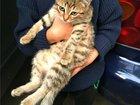 Фото в   Ищет дом очаровательный полосатый котенок. в Москве 0