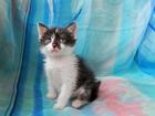 Фото в Отдам даром - Приму в дар Отдам даром Очаровательный чёрно-белый котик, малышу в Москве 0